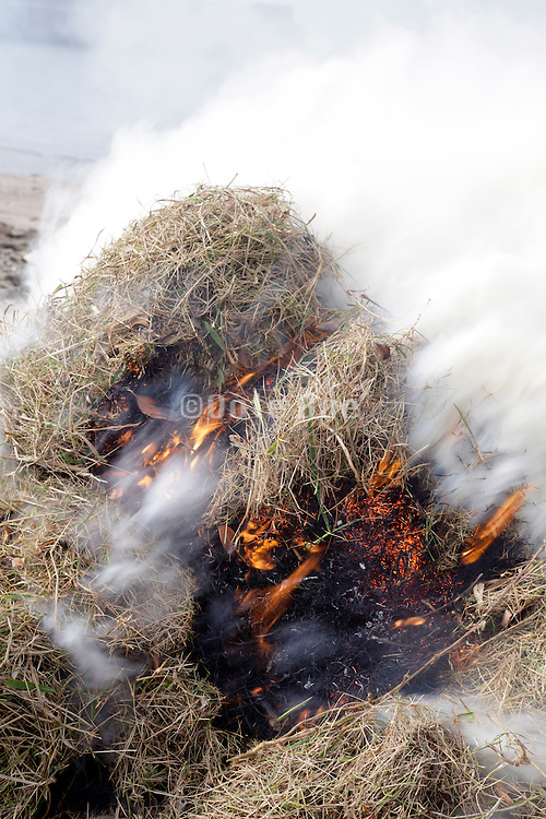 close up of a bail of collected beach straw burning at the water edge Tokyo bay