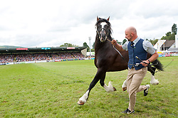 24/07/2019. Llanelwedd, Powys, UK. Cob Stallion events, together with stallion and cob championship  events and the prestigious 'George Prince of Wales Cup events take place in the main ring on the third day of the Royal Welsh Agricultural Show. The Royal Welsh Agricultural Society was Founded in 1904, and the Royal Welsh Agricultural Show is hailed as the largest and most prestigious event of its kind in Europe, with in excess of 200,000 visitors usually expected for the annual four day show period. Photo credit: Graham M. Lawrence/LNP