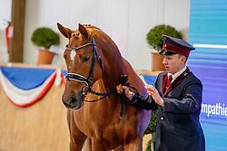 Le President an der Hand<br /> Klein Offenseth - Hengstschau Stall Hell 2020<br /> © www.sportfotos-lafrentz.de/Stefan Lafrentz