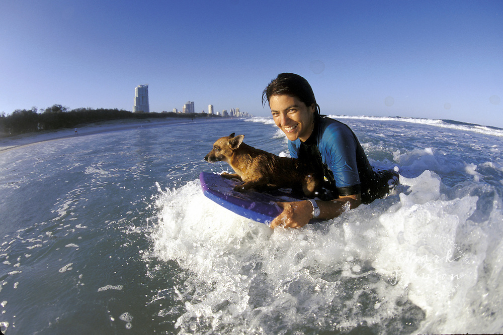 Australia, Qld., Gold Coast, woman boogie boarding with chihuahua
