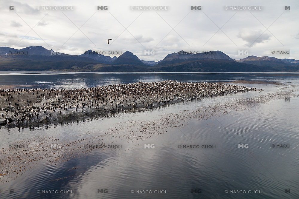 ISLOTES CON CORMORANES EN EL CANAL BEAGLE, USHUAIA, PROVINCIA DE TIERRA DEL FUEGO, ARGENTINA (PHOTO BY © MARCO GUOLI - ALL RIGHTS RESERVED. CONTACT THE AUTHOR FOR ANY KIND OF IMAGE REPRODUCTION)