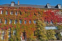 Autumn ivy covered building near La Croix-Sonnet in Normandy, France
