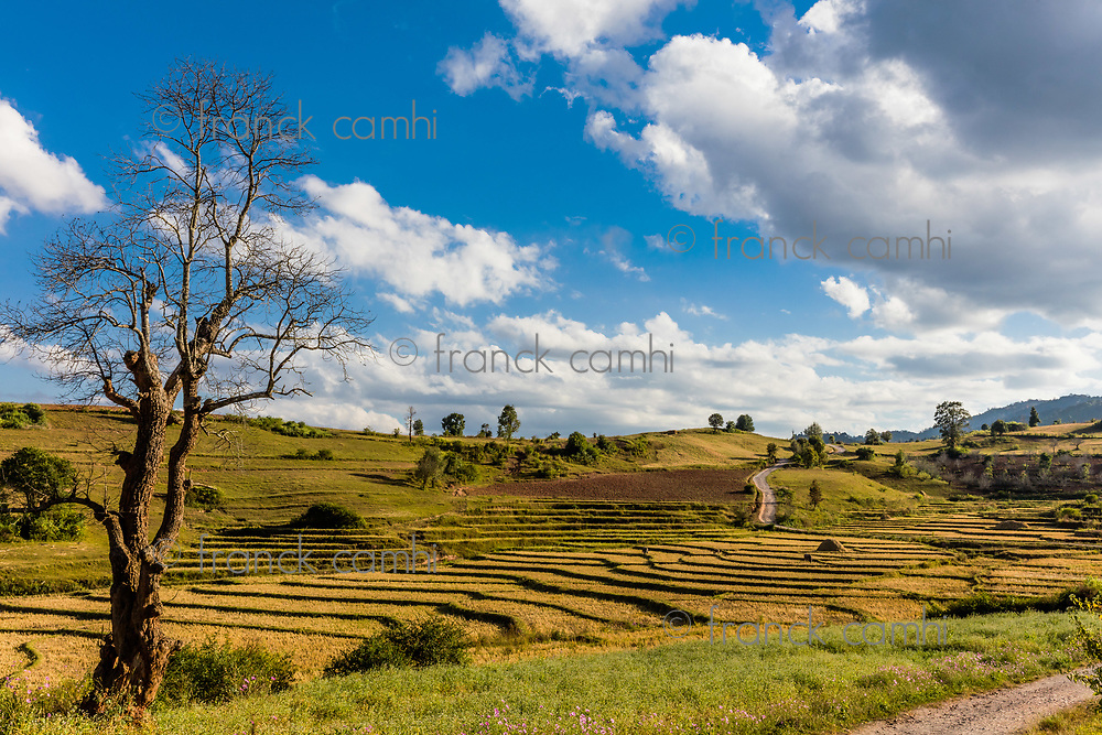 cultivated land fields landscaped near Kalaw Shan state in Myanmar (Burma)