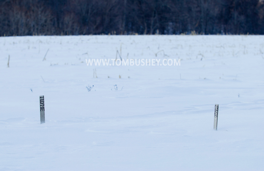Chester, New York - Markers for thyme and sage poke through the snow in a  field at Peace and Carrots Farm on Feb. 19, 2015.