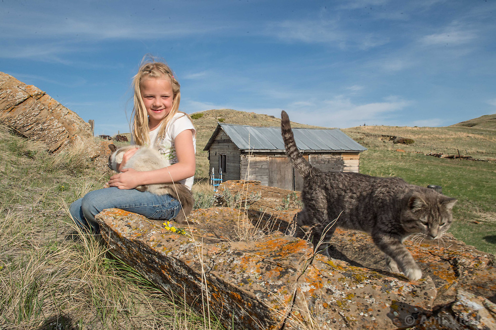Kennedy Koss holds her cats on the Koss's land in Eastern Montana on May 11, 2013. The Koss's work with The Nature Conservancy on the &ldquo;grass bank&quot; project which is an innovative way to leverage conservation gains, in which ranchers can graze their cattle at discounted rates on Conservancy land in exchange for improving conservation practices on their own &ldquo;home&rdquo; ranches. In 2002, the <br /> Conservancy began leasing parts of the ranch to neighboring ranchers who were suffering from several years of severe drought essentially offering the Matador&rsquo;s grass to neighboring ranches in exchange for their  participation in conservation efforts. Thirteen ranchers graze their cattle on the Matador and the grassbank has enabled TNC to leverage conservation on more than 225,000 additional acres of private land without the cost of purchase of the land or of easements. The grassbank has helped keep ranchers from &ldquo;busting sod,&rdquo; or  plowing up native grassland to farm it; helped remove obstacles to pronghorn antelope migration; improved habitat for the Greater Sage-Grouse and reduced the risk of Sage-Grouse colliding with fences; preserved prairie dog towns (thereby preserving an important food source for the endangered black-footed ferret) and prevented the spread of noxious weeds. (Photo By Ami Vitale)