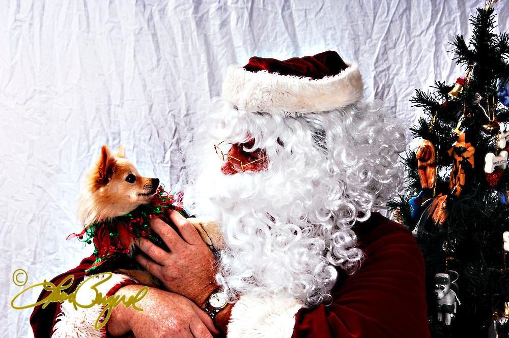 Santa photos LA SPCA
