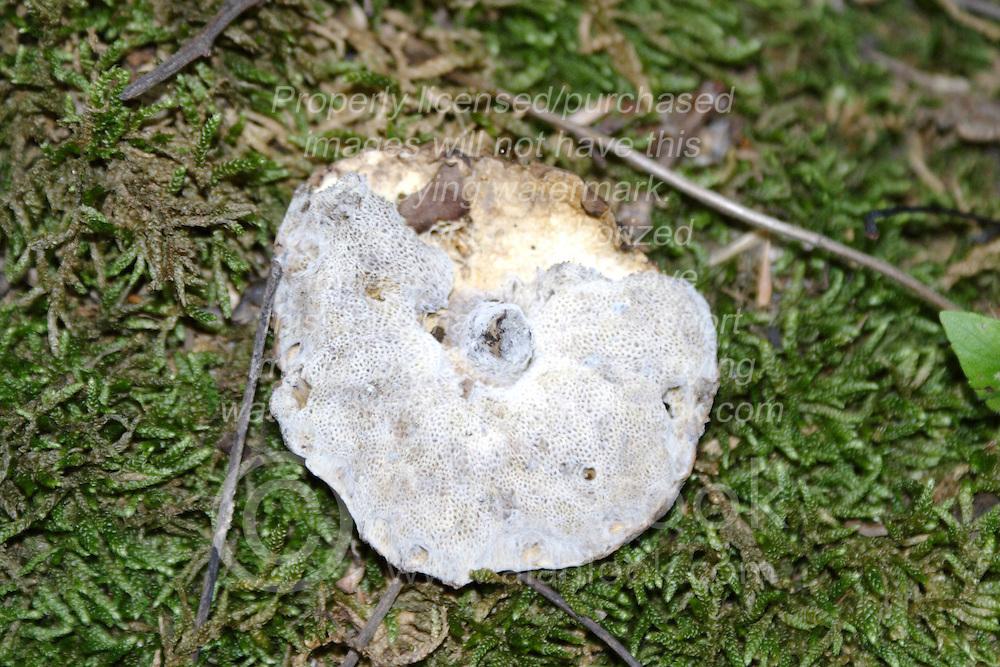 July 2007:  Mushroom,  Shot at the Trail of Tears State Park near Cape Girardeau, Missouri