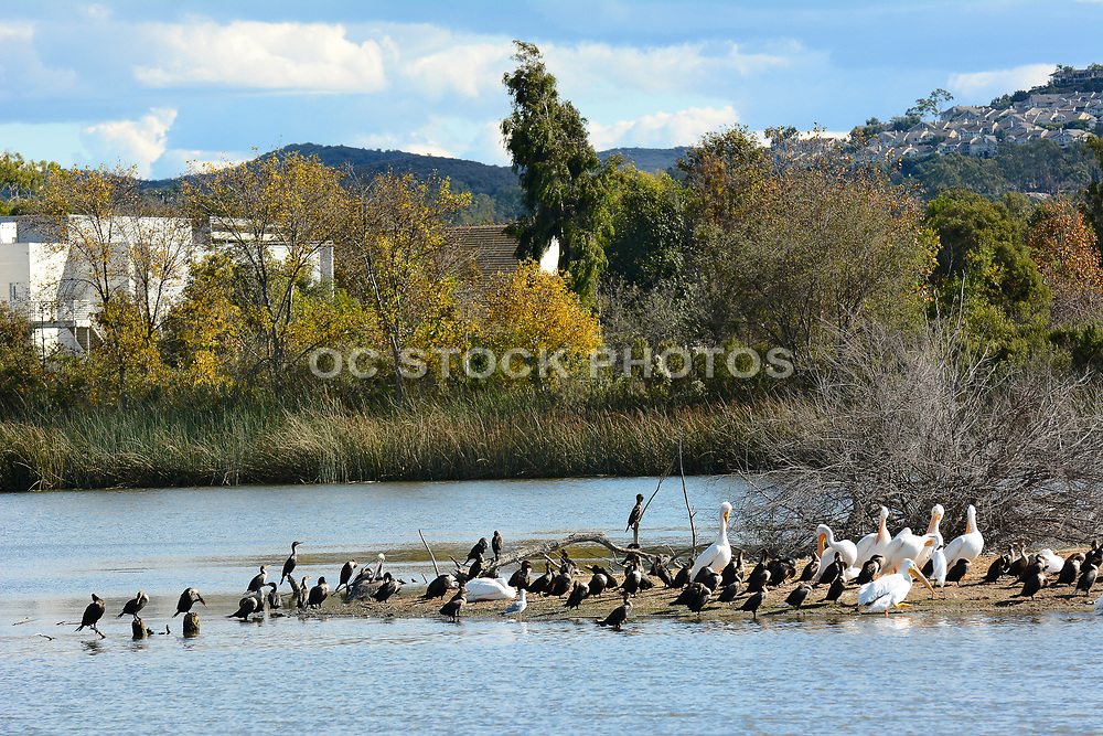 Waterfowl at San Joaquin Marsh in Irvine