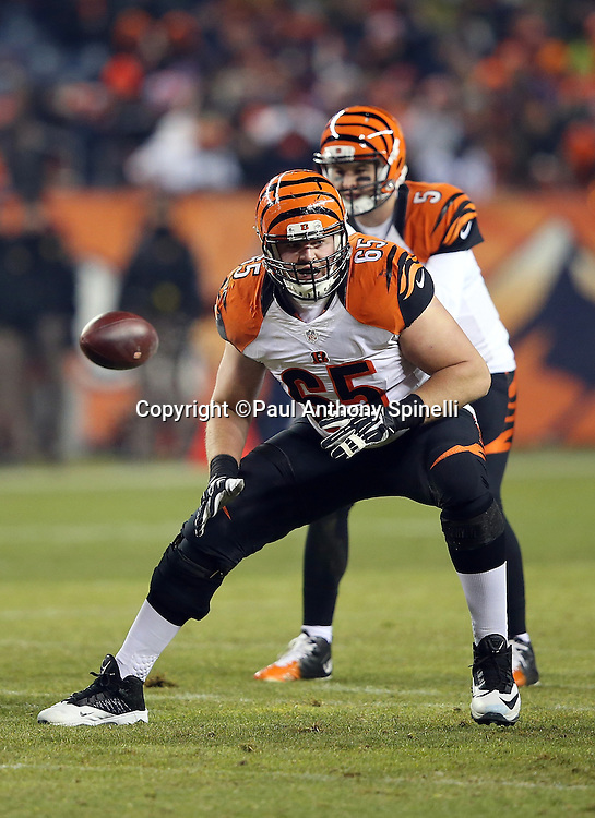 Cincinnati Bengals guard Clint Boling (65) pass blocks during the 2015 NFL week 16 regular season football game against the Denver Broncos on Monday, Dec. 28, 2015 in Denver. The Broncos won the game in overtime 20-17. (©Paul Anthony Spinelli)