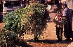 Fully laden donkey, Ourika souk, Morocco.