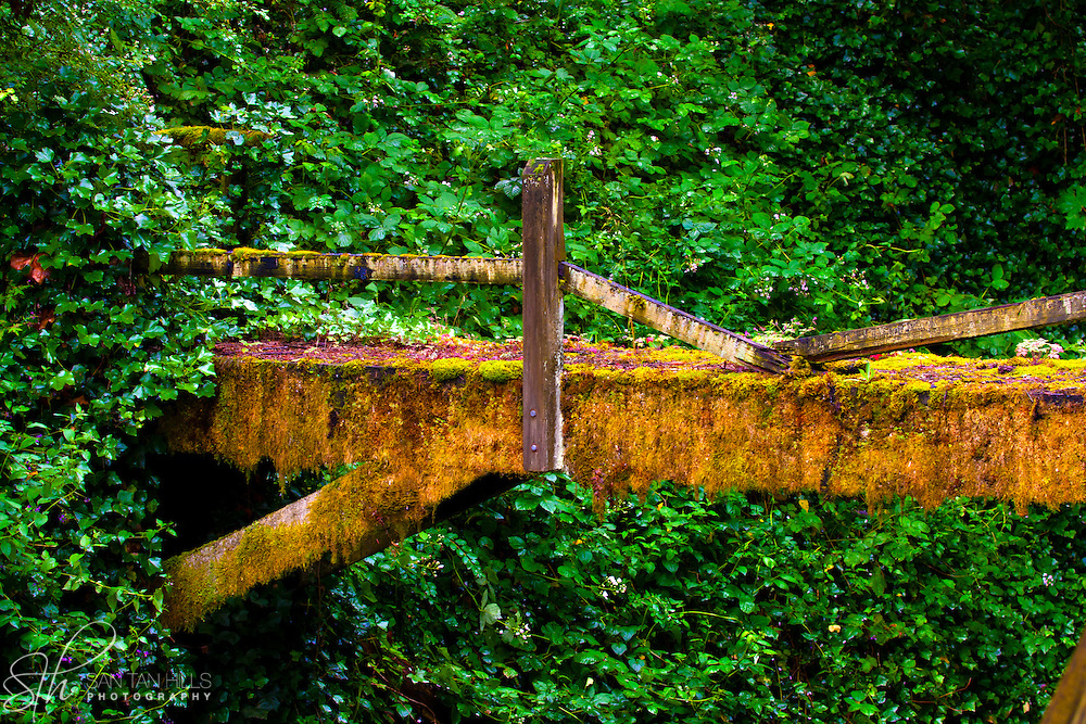 an old flume through the gulch of Lower Macleay Park - Portland, OR