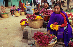Asia, Nepal, Kathmandu Valley, Bhaktapur. Hindu girls sell marigold flowers, used to decorate homes for Tihar Dipawali Festival.
