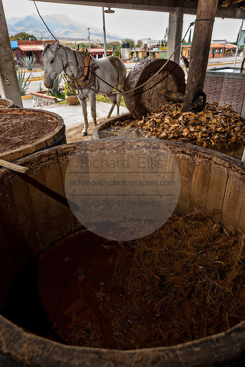 A horse works pulling a mill stone to crush roasted blue agave mash at an artisanal Mezcal distillery November 5, 2014 in Matatlan, Mexico. Making Mezcal involves roasting the blue agave, crushing it and then fermenting the liquid.