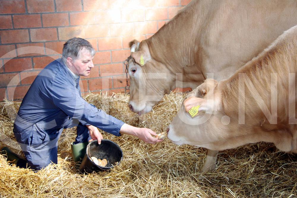 060328, wierden, ned<br /> Jan Eggerik (L) is uitgeroepen tot Blonde d' Aquitaine fokker van het jaar met de koe Starmaker (M) en zijn nakomeling (R),<br /> fotografie frank uijlenbroek&copy;2006 jasper van der zwan