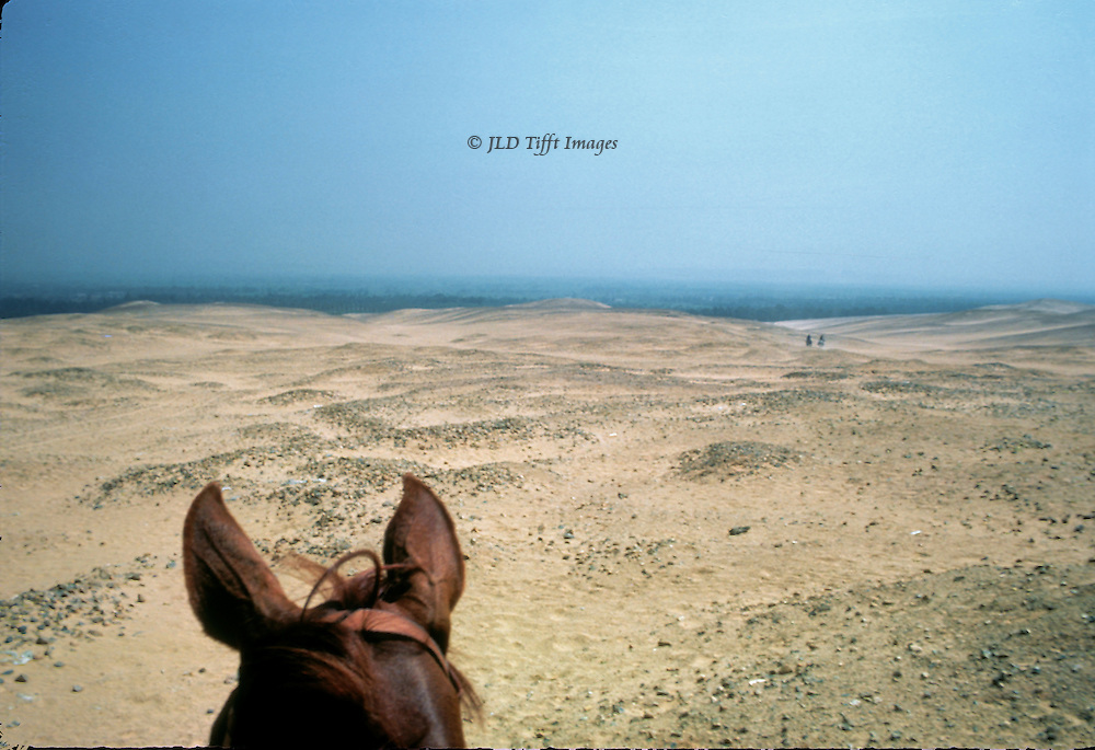 Head of the photographer's horse looking across the desert toward the Nile valley and the city of Cairo.