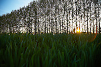 Row of Trees in Countryside
