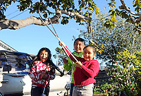 Children play in a tree near the intersection of Sanborn Road and Laurel Avenue in East Salinas. The area near Acosta Plaza has been troubled by sporadic gang violence.