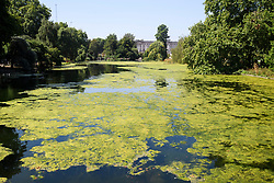 © Licensed to London News Pictures. 06/08/2018. London, UK. Algae covered St James's Park lake next to Buckingham Palace in London, as hot weather continues in the capital. Photo credit: Ben Cawthra/LNP
