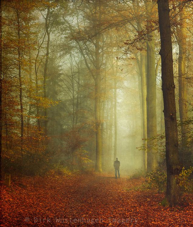 Man walking in autumn forest - texturized photograph<br /> Licenses:<br /> http://www.westend61.de/koala2/imgsearch.html?number=DWI000626&amp;mode=pv