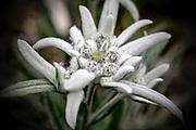 White flower growing in a garden