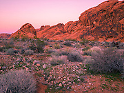 Red rock formations at sunset in the desert, Valley of Fire State Park, Nevada, USA.  Valley of Fire State Park is located in the Mojave Desert in southern Nevada.