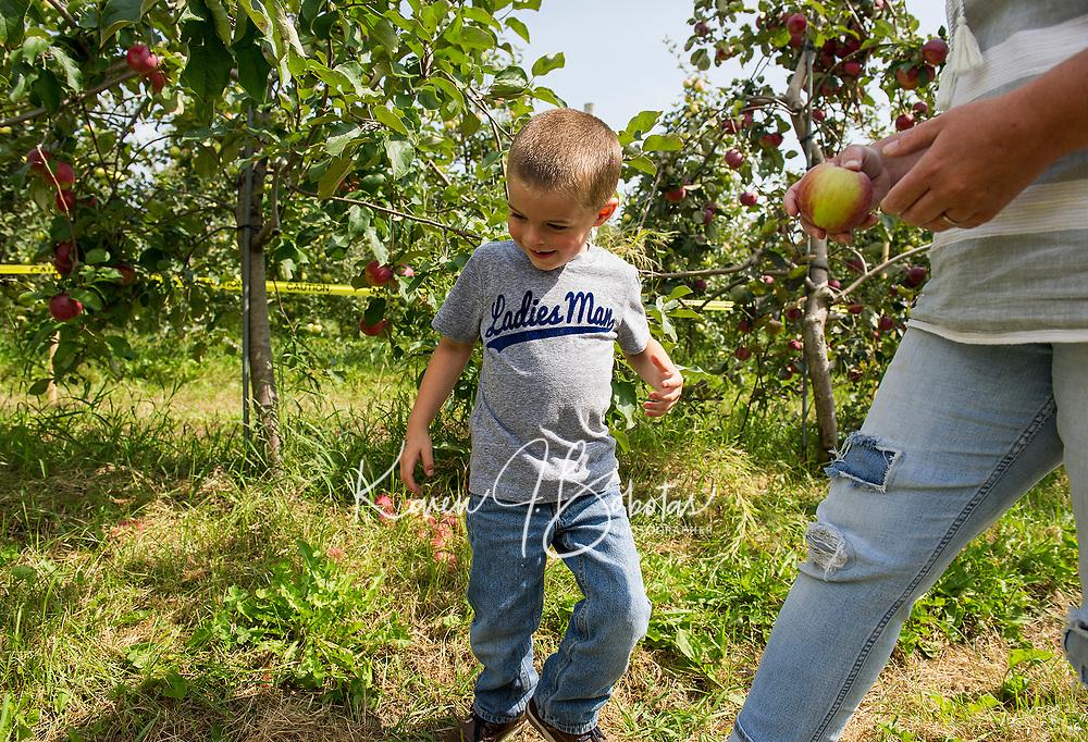 Surowiec Farm in Sanbornton - apple picking.  Karen Bobotas for the Laconia Daily Sun