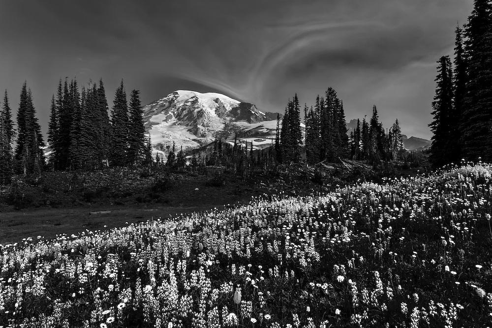 7:42 AM Mount Rainier from Mazama Ridge monochrome