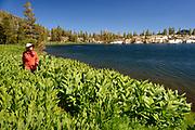 Walking around Honeymoon Lake Desolation wilderness hike in south lake tahoe