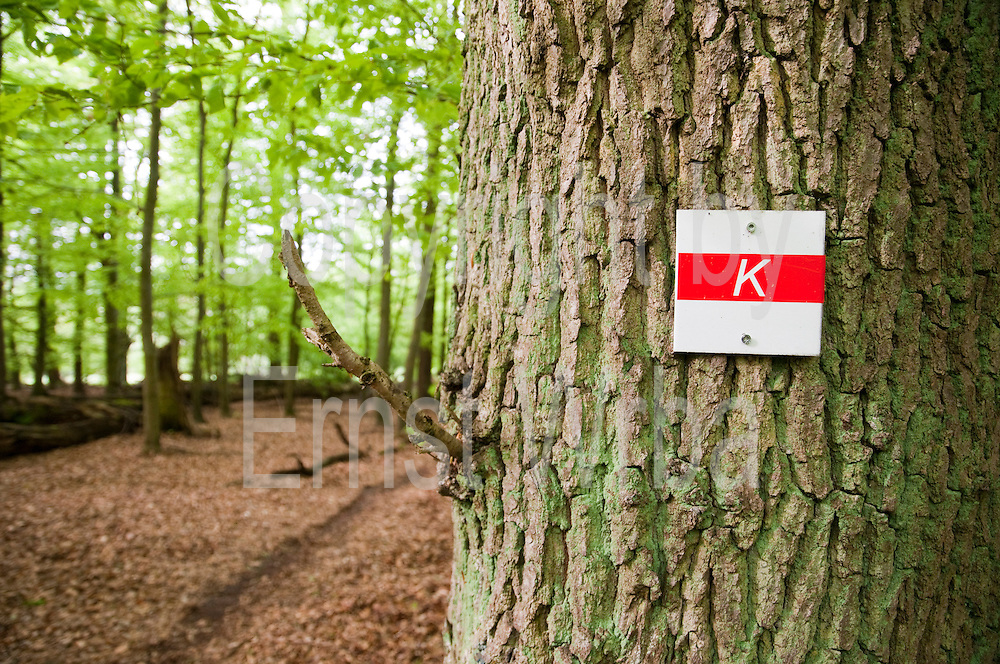 Wanderweg Markierung, Karstwanderweg, Karstgebiet, Wald bei Osterode, Harz, Niedersachsen, Deutschland | walking sign, Forest near Osterode, Harz, Lower Saxony, Lower Saxony, Germany