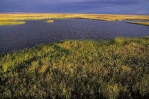 Alaska, Summer Scenics, Tundra pond in evening light. Barrow, Alaska.