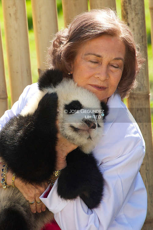 Spanish Queen Sofia visit the nursery area for pandas and play with the bears, Po and Dede, at Zoo Aquarium in Madrid