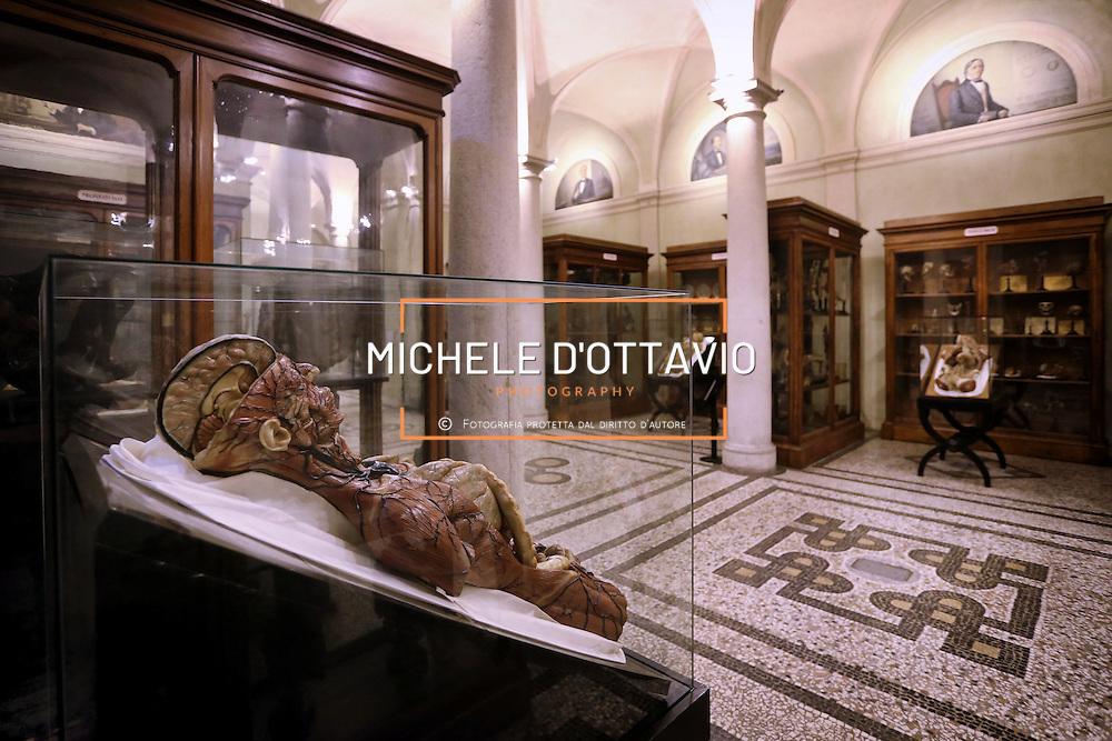 """Museo di Anatomia umana """"Luigi Rolando"""" dell'Università degli Studi di Torino"""