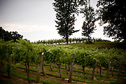 West Bend Vineyard and Winery, in the Yadkin Valley, NC.
