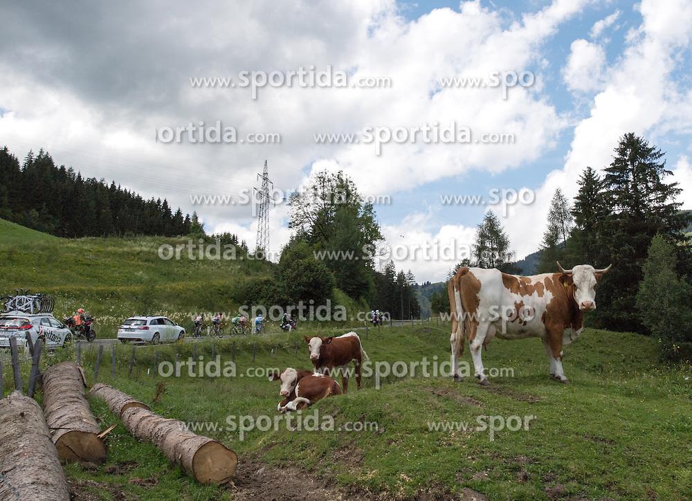 06.07.2016, Heiligenblut, AUT, Ö-Tour, Österreich Radrundfahrt, 4. Etappe, Rottenmann zur Edelweissspitze, im Bild Kühe beobachten das Rennen // Kühe beobachten das Rennen during the Tour of Austria, 4th Stage from Rottenmann to Edelweissspitze. Heiligenblut, Austria on 2016/07/06. EXPA Pictures © 2016, PhotoCredit: EXPA/ Reinhard Eisenbauer