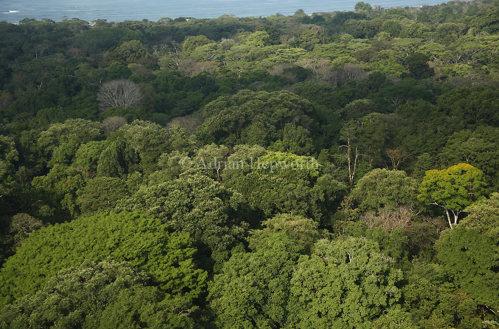 Aerial photo of rainforest and coast near Sirena Ranger Station. Corcovado National Park, Osa Peninsula, Costa Rica. <br />