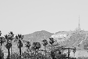 Black and white photo landscape wall art. Hollywood Sign, palm trees and Los Angeles skyline. Matted print, limited edition. Fine art photography print.