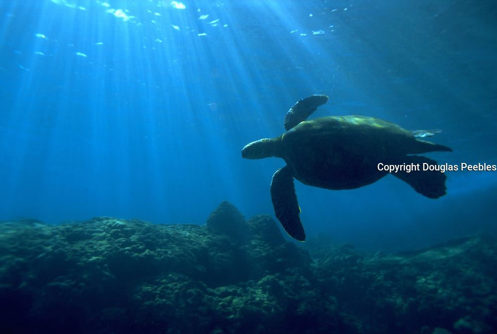 Sea Turtle, Hawaii, USA<br />