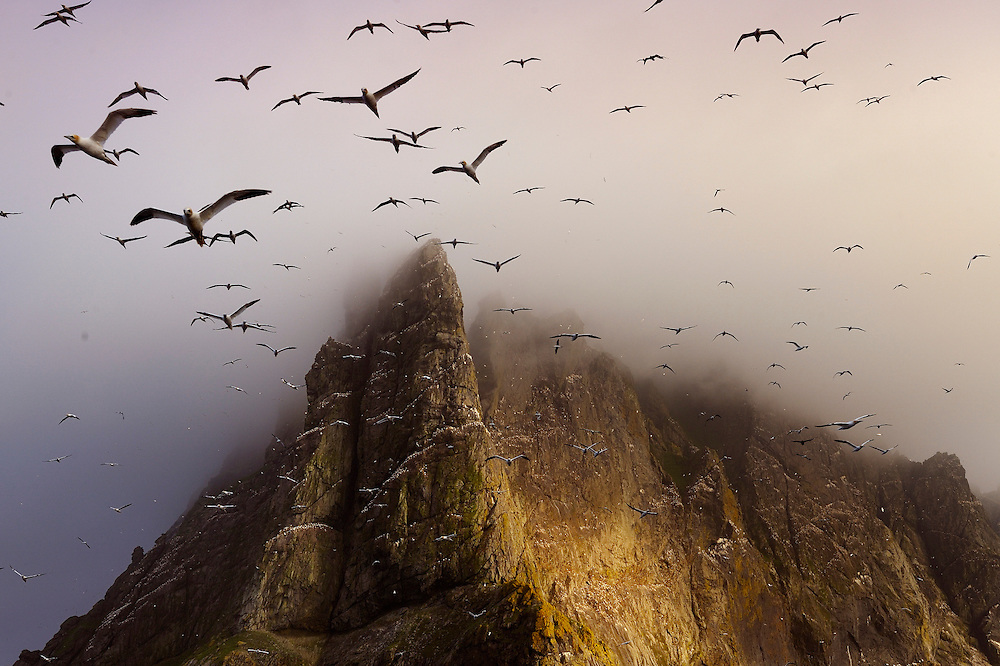 Berneray is four miles from St, Kilda, famed for its fantastic bird colonies.  Uninhabited, remote and wild, it was the site of incredible feats of cliff climbing by the St. Kildans who hunted the birds. To buy this print click on the SHOPPING CART below.