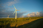 Windmills, Upolu, North Kohala, Island of Hawaii
