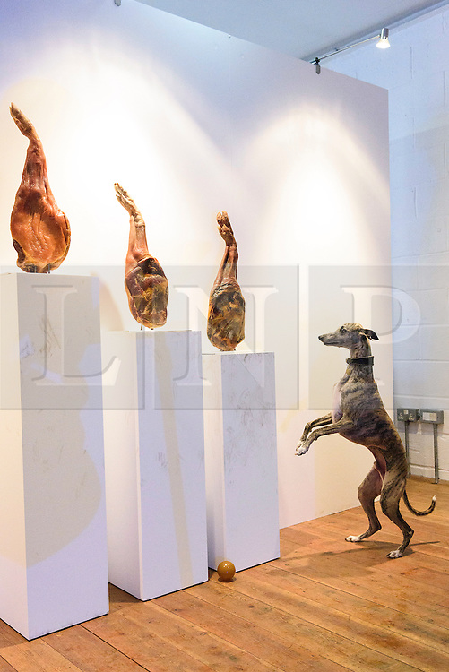 © Licensed to London News Pictures. 20/08/2016. Dog enjoys artwork made from three legs of parma ham at the world's first art exhibition for dogs was created by artist DOMINC WILCOX is part of the MORE THAN's #PlayMore campaign, encouraging owners to spend more time playing with their pets.  London, UK. Photo credit: Ray Tang/LNP