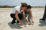 Israel, Arlit, Volunteers releasing a green turtle, Chelonia mydas, after hatching for their first voyage to the Mediterranean Sea