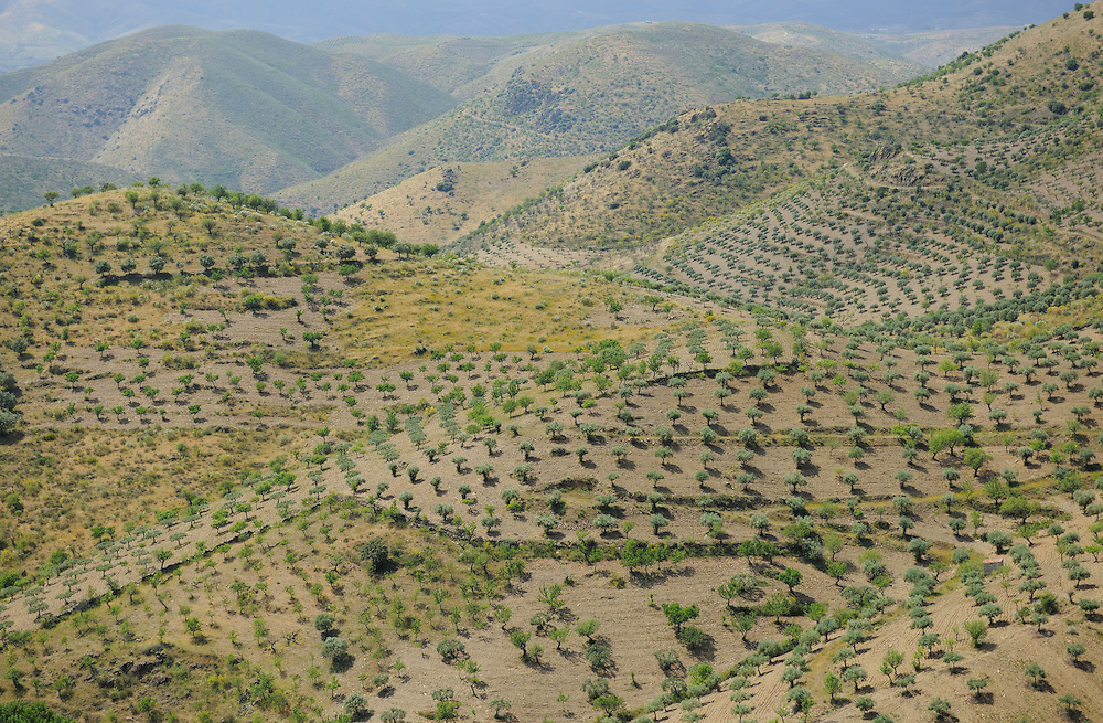 Olive farm, C&ocirc;a valley,<br /> Portugal