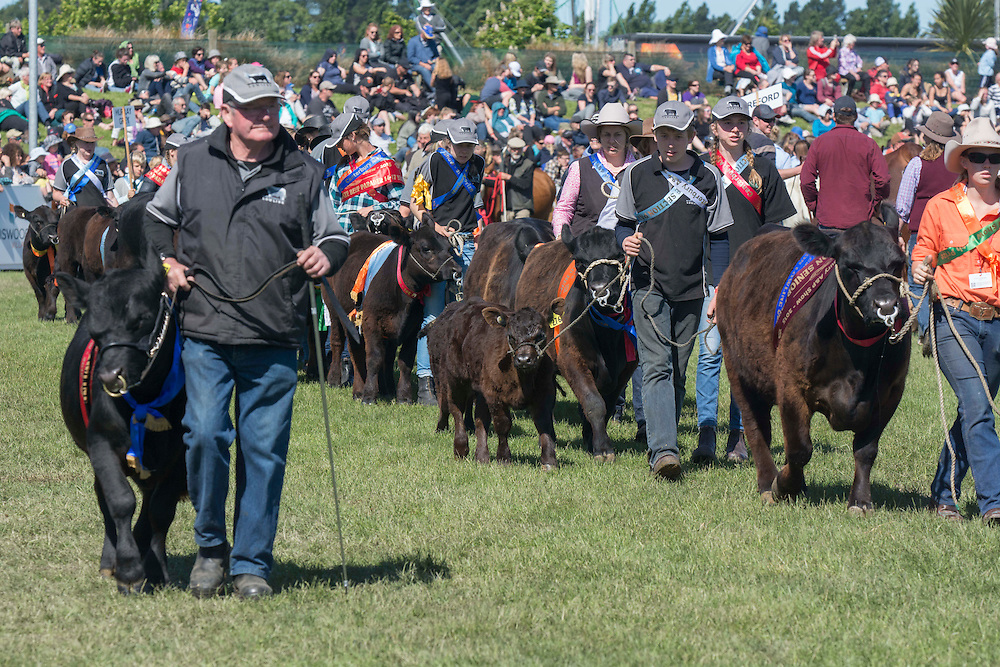 Cattle in the Grand Parade at the Canterbury A&amp;P Show, Christchurch, New Zealand, Friday, 13 November, 2015.<br /> Credit:SNPA / David Alexander