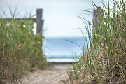 A serene trail leading to the beach through an opening in the fence. Beach grass sways in the wind as the surf roars ahead