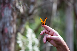 beautiful butterfly on a man's finger outdoors in Florida