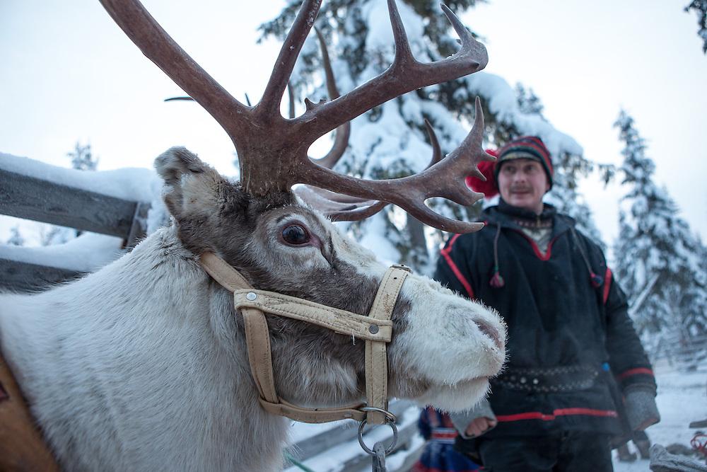 FINNLAND - Lappland - REISE/Travel; Region um Kittilä im Norden Lapplands; Skigebiete, Winter, Schnee; Die Region Ylläs in Lappland besteht aus sieben Fjälls, wobei der Ylläs-Fjäll.mit 718 Metern einer der höchsten in Lappland ist. HIER: Rentierfarm - Samin Porotila - in Venejärvenkylä; Rentierzüchter; Trachten, Ureinwohner Samen, Kinder, Fütterung Rentiere, Schlittenfahrten mit Touristen  Ylläs, 16.01.2011