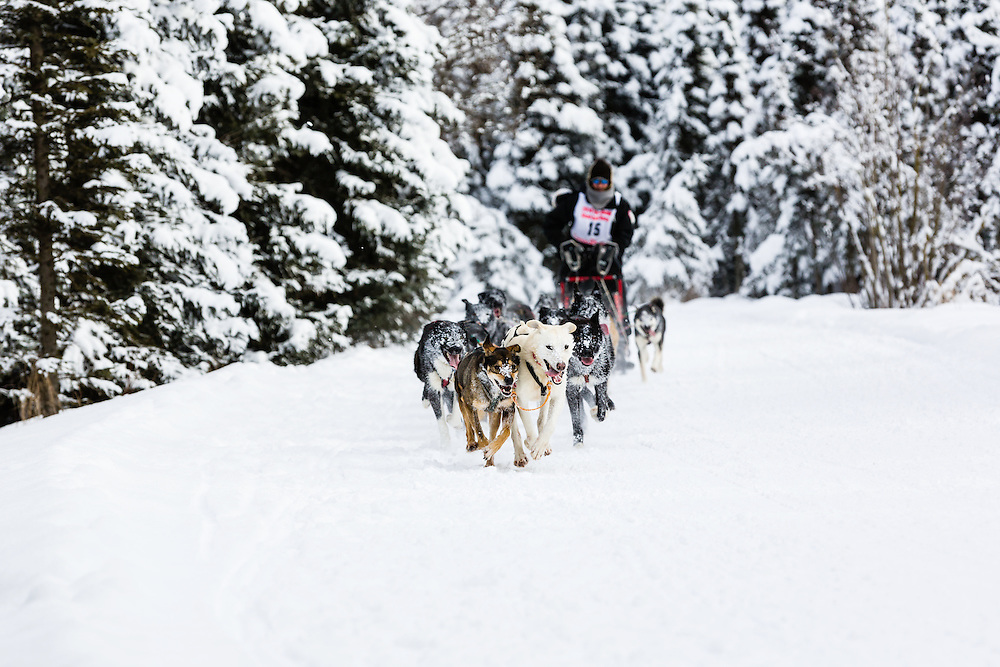 Musher Lance Mackey competing in the Fur Rendezvous World Sled Dog Championships at Goose Lake Park in Anchorage in Southcentral Alaska. Winter. Afternoon.