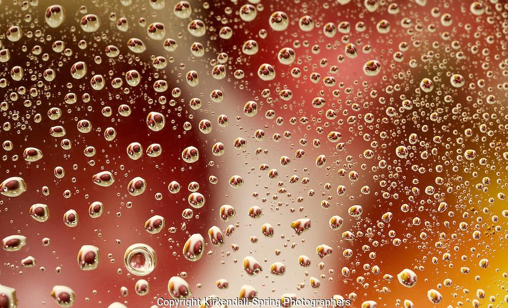 WA13400-00...WASHINGTON - Water droplets on glass reflecting apples.