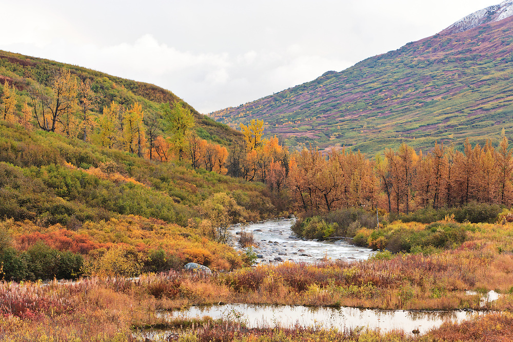 Fall colors of Little Susitna River Valley at Hatcher Pass in Southcentral Alaska. Fall. Afternoon.