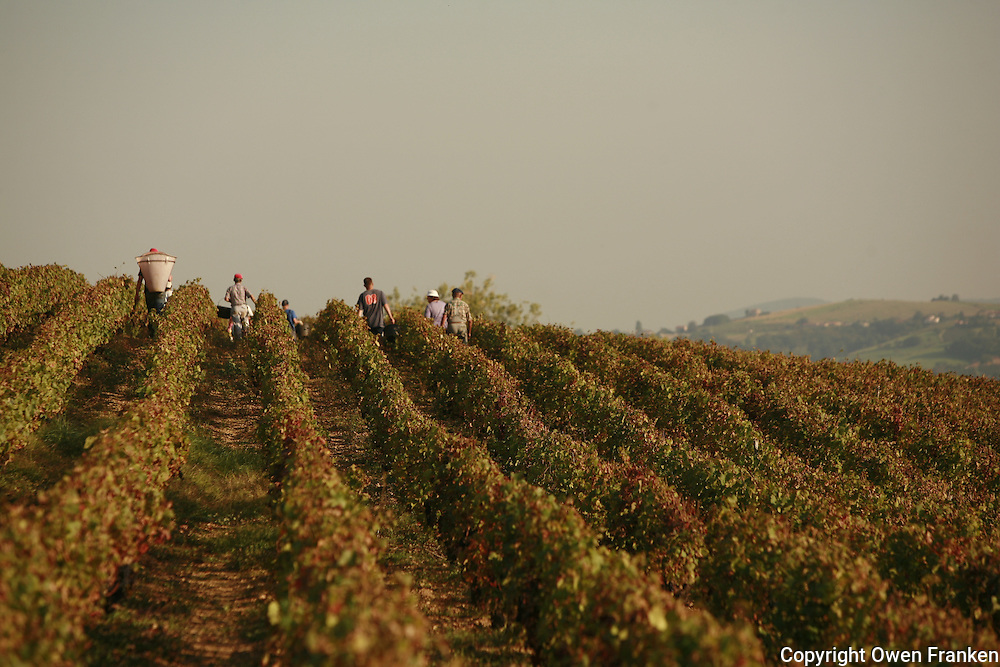 Domaine du Vissoux, Beaujolais<br />